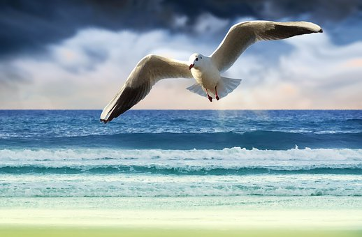 Gull, Bird, Freedom, Flying, Wing, Nature, Water Bird