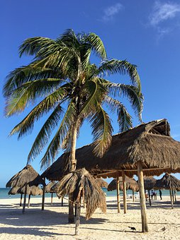 Beach, Palm Trees, Paradise, Tropical, Sand, Ocean, Sea