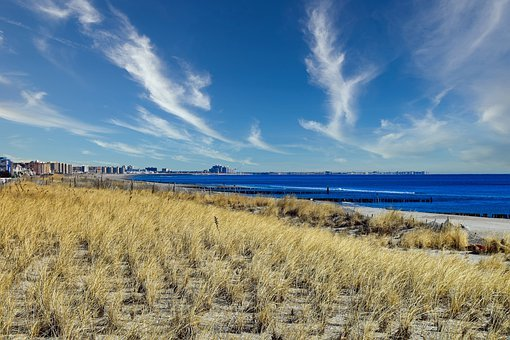 Beach Grass, Rockaway Beach, Queens, New York City