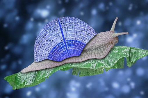 Snail, Reptile, Shell, Slowly, Probe, Snail Shell