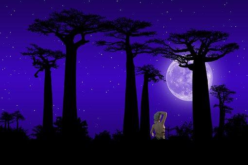 Dusk, Night, Landscape, Silhouette, Watch, Star, Scenic