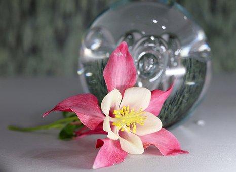 Flower, Pink, Columbine, Glass Ball, Still Life, Garden