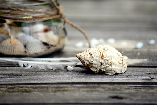 Mussels, Flotsam, Collect, Glass, Vacations, Summer