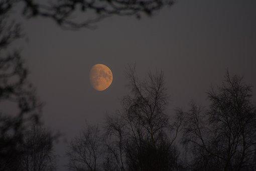 Moon, Night, Dark, Moonlight, Forest, Night Sky, Trees