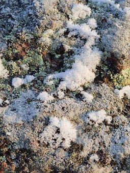 Snow, Frost, Ice, Winter, Lichen, Cold, Frozen, Nature