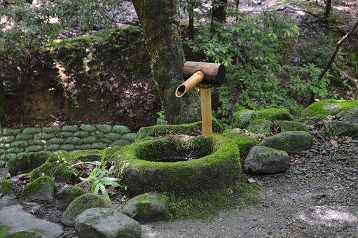 Japan, Park, Kyoto, Nature, Zen Forest, Zen, Garden