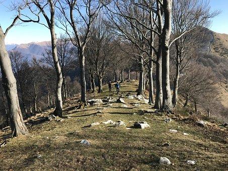 Monte San Bernardo, Alpine Route, Alps, Alpine