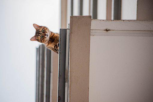 Cat, Architecture, Balcony, Curious Look