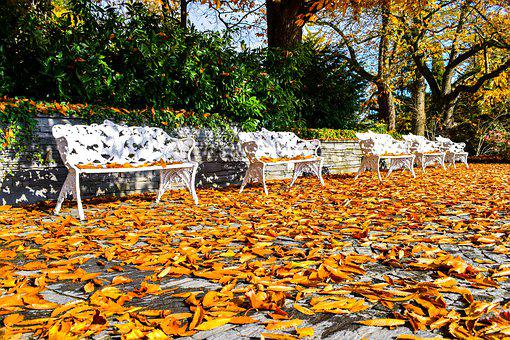 Autumn, Bank, Beauty, Colors, Cover, Ecology, Fall