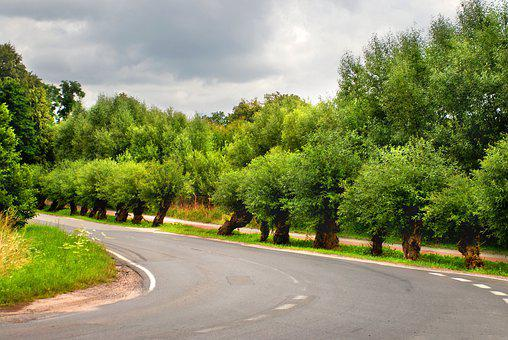 Bend, Street, Road, Traffic, Curve, Asphalt, Tree, View