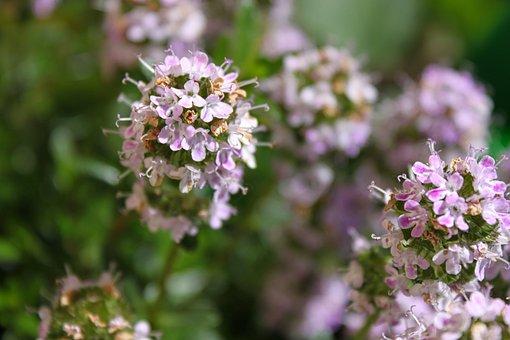 Flowers, Blossom, Bloom, Purple, Plant, Nature, Bloom