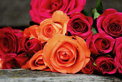 Roses, Bouquet Of Roses, Noble Roses, Valentine's Day