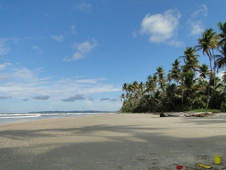 Coconut Trees, Coastline, Coast, Sand, Tropical, Island