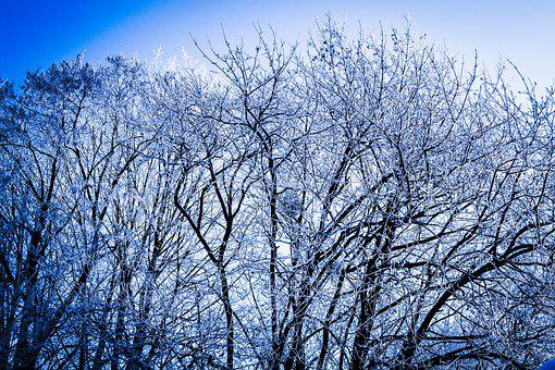 Winter, Cold, Snow, Frost, Nature, Landscape, Forest