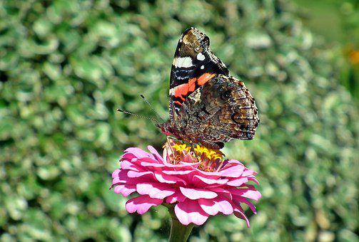 Butterfly, Insect, Colored, Nature, Macro, Butterflies
