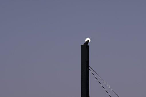 Full Moon, Raven, Pylon, Tram Line, Dawn