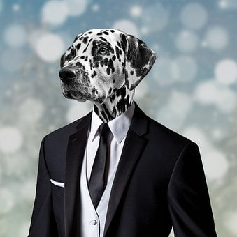 Dog, Animal, Human, Pet, Cute, Funny, Portrait