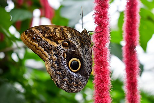 Animal, Bug, Butterfly, Color, Exotic, Flower, Fly