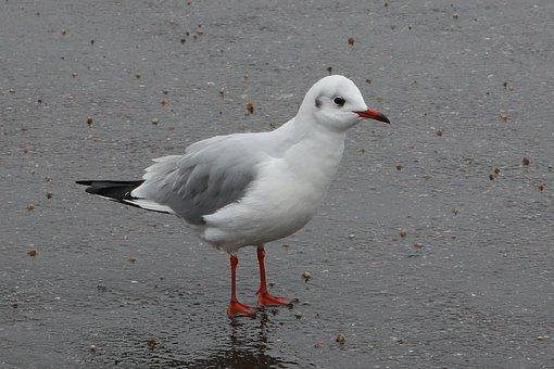 Birds, Seagull, Wings, Sea, Freedom, Ocean, Winters