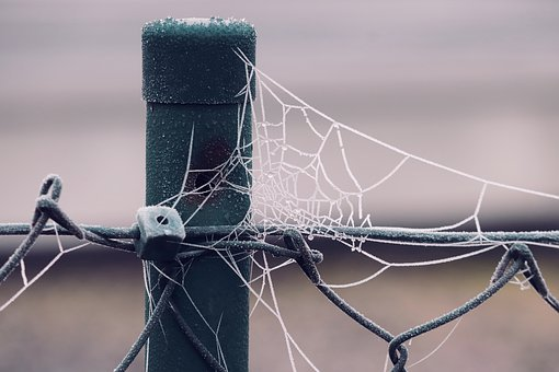Spider Webs, Hoarfrost, Frozen, Fence, Post, Cold
