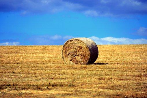 Straw Bales, Hay Bales, Cornfield, Field, Harvest