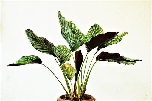 Indoor Plant, Green Plant, Indoor, Garden, Botanical