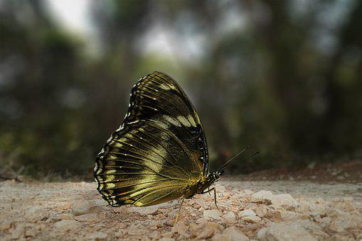 Butterfly, Insect, Wing, Macro, Summer, Animal World