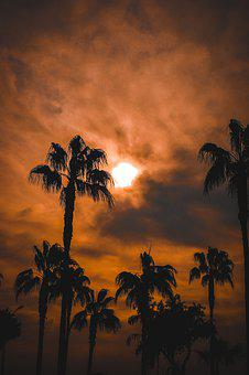 Palm, Palmer, Sky, Tropical, Nature, Leaves, Exotic