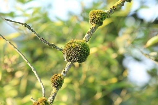 Moss, Branch, Plant, Green, Landscape, Bark, Weave