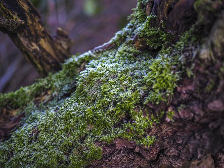 Nature, Moss, Forest, Green, Tree, Landscape, Plant