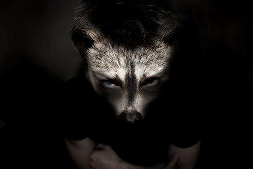 Animal, Man, Raccoon, Werewolf, Creepy, Scary, Dark