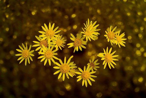 Flower, Plant, Nature, Spring, Blossom, Bloom, Garden