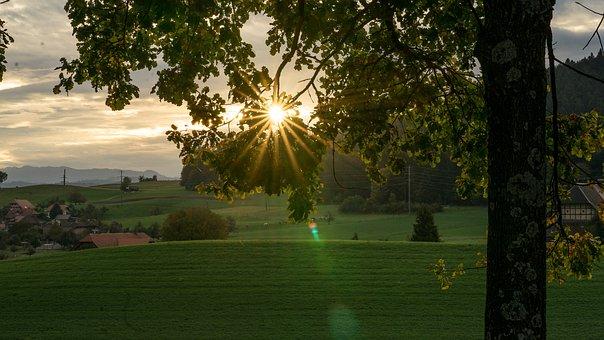 Nature, Landscape, Sunrise, Beautiful, Tree, Sun