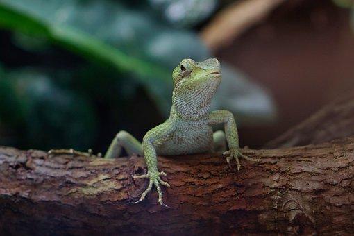 Terrarium, Gecko, Reptile, Lizard, Nature, Animal