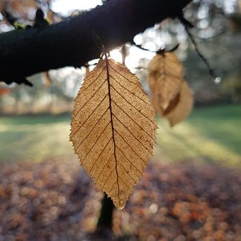 Leaf, Structure, Texture, Pattern, Branch, Winter