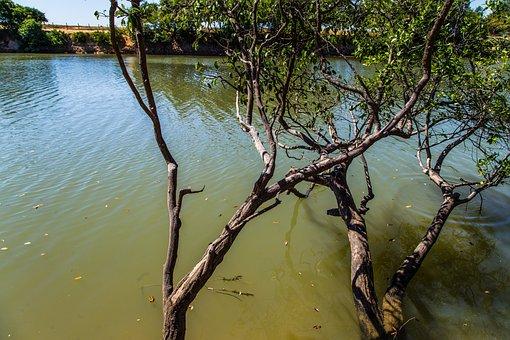 The River's Fish And, Beach, Brazil, Goiás, Landscape