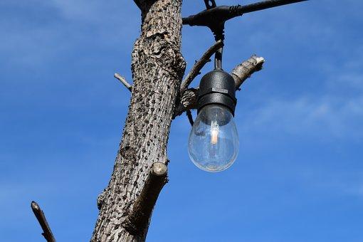 Light Bulb, Branch, Tree, Twig, Bark, Trunk, Sky, Blue