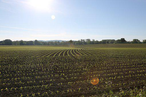 Arable, Cultivation, Field, Agriculture