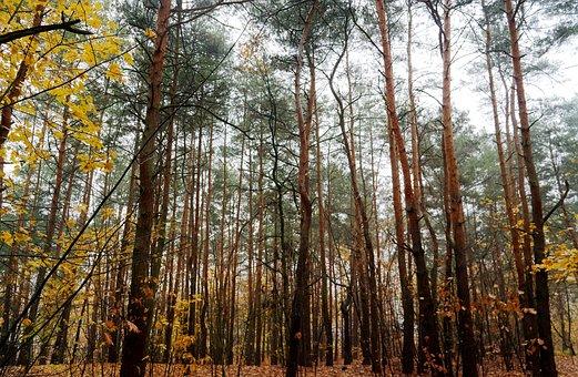 Landscape, Autumn, Forest, Trees, Trunks, Leaves