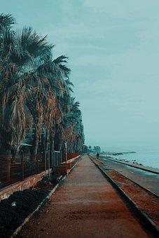 Road, Beach, Ribbon, Palm, Marine, Nature, Water