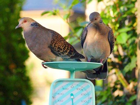 Creatures, Wild Animals, Bird, Dove, Measurement