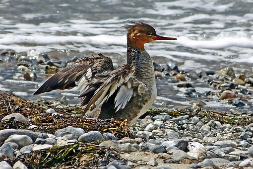 Bird, Water, Wing, Poultry, Water Bird, Animal World