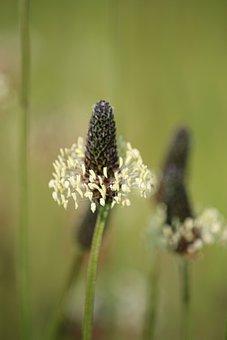 Blossom, Bloom, Sharp Sheaf, Close Up, Naturopathy