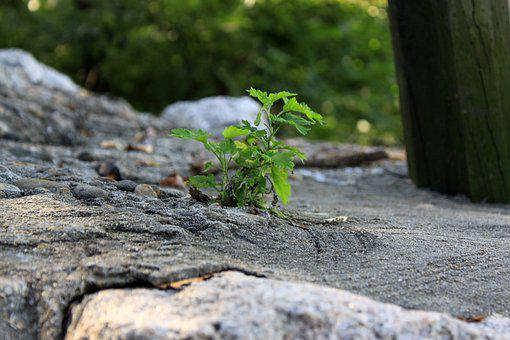 Wildflower, Cement, Environment, Flowers, Surface