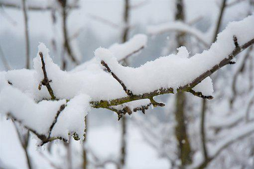 Snow, Forest, Cold, Snowflakes, Tree, Branch, Nature