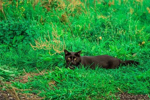 Cat, Black, Meadow, Green, Kitten, Hunt, Crawl, Animal
