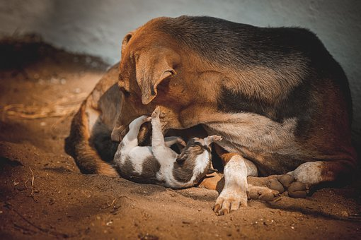 Mother, Dog, Family, Portrait, Puppy, Mom, Cute, Nature