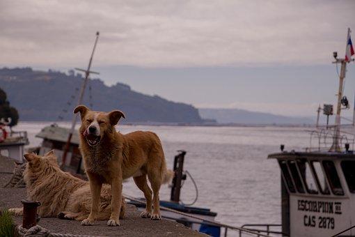 Dog, Chile, Sea, Harbor, Fishing