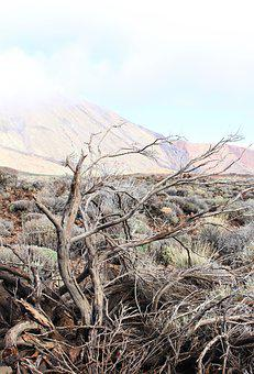Tenerife, Spain, Dry, Dried, Dead, Faded, Tree