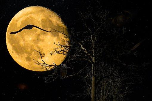 Background, Fantasy, Night, Full Moon, Owl, Eagle Owl